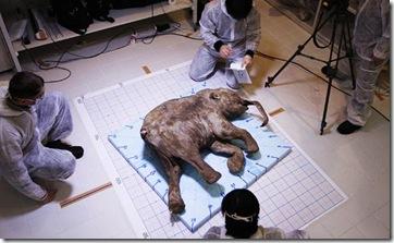 Mammoth_623502a