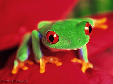 ColorfulFrog