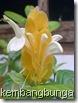 bunga lilin 2441