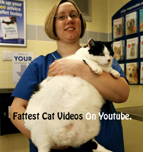 Top 10 Fattest Cat Videos On YouTube - Funny Fat Cats Video
