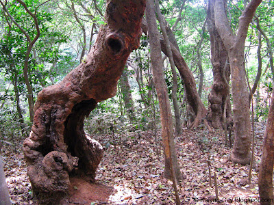 bizarre alien shaped tree