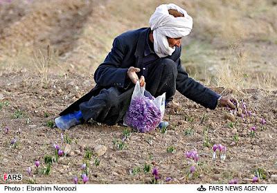 Kashmiri Kesar Saffron