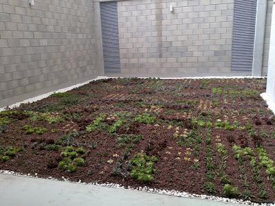 cubierta vegetal de plantas crasas