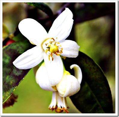 Maggielamarre-bloomorange
