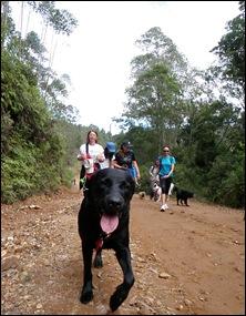 Pets Adventure 2 (118)