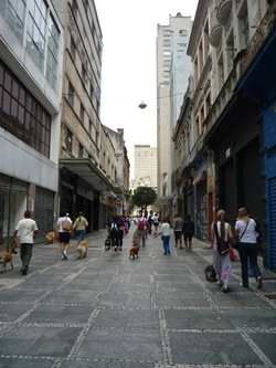 Cãonhecendo São Paulo (143)