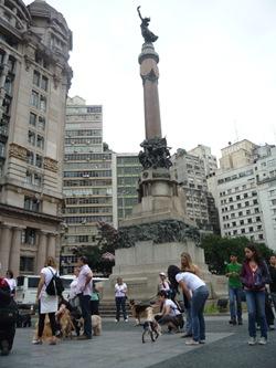 Cãonhecendo São Paulo (246)