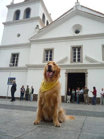 Cãonhecendo São Paulo (240)