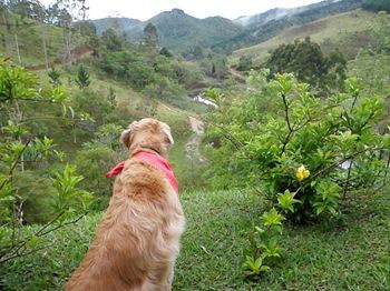 Dogs Trekking 3 (281)