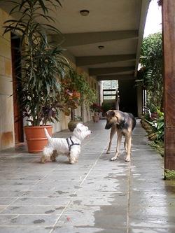 Dogs Trekking 3 (39)