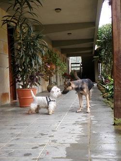 Dogs Trekking 3 (40)