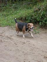 Dogs Trekking 3 (103)