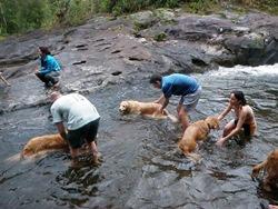 Dogs Trekking 3 (220)