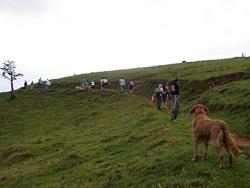 Dogs Trekking 3 (173)