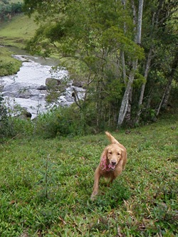 Dogs Trekking 3 (164)