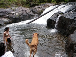 Dogs Trekking 3 (202)
