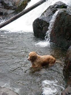 Dogs Trekking 3 (239)