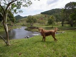 Dogs Trekking 3 (277)