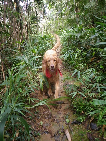 Dogs Trekking 3 (425)