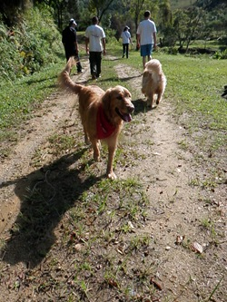 Dogs Trekking 3 (297)