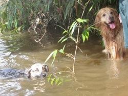 Dogs Trekking 3 (389)