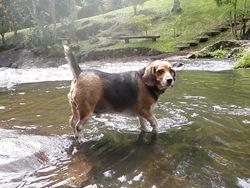 Dogs Trekking 3 (414)