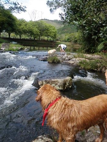 Dogs Trekking 3 (349)
