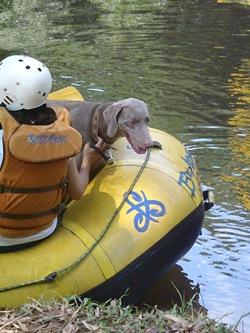 Pet's Adventure 3 (107)