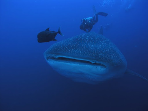 http://lh3.ggpht.com/_iRCt-m6tg6Y/SeITjIwArTI/AAAAAAAAGjk/VUZd00tfYXc/best-diving-place-07.jpg