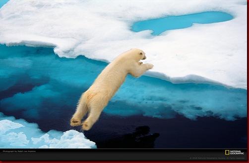 blue-polar-bear-hopkins-1052295-xl