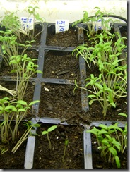 planties 004