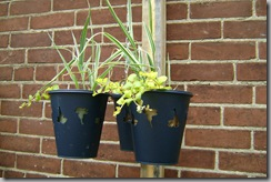 hanging ikea planters