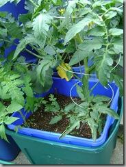 sub-i planter SIP #3