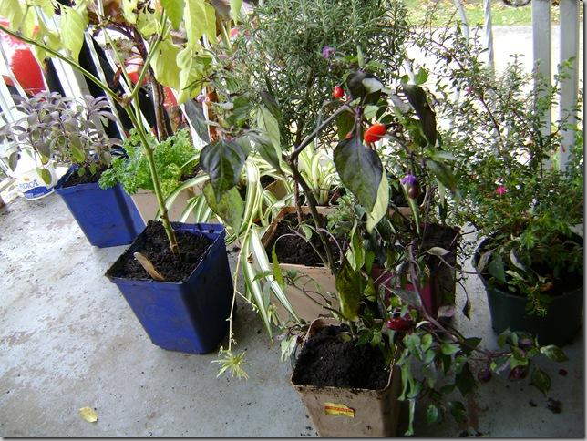 garden cold 004