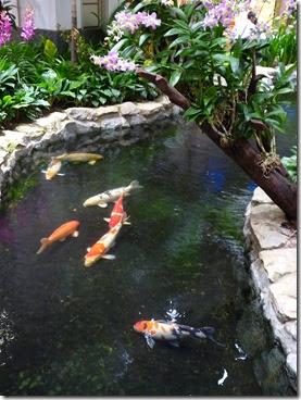 My 3 ponds koi pond at singapore changi airport for Koi pond design layout