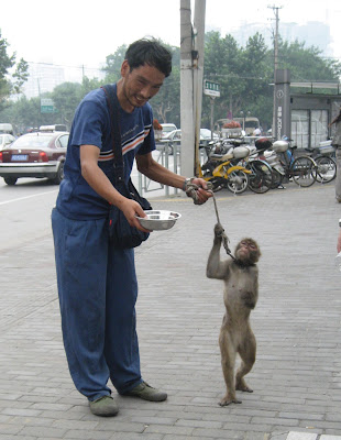 Shanghai monkey