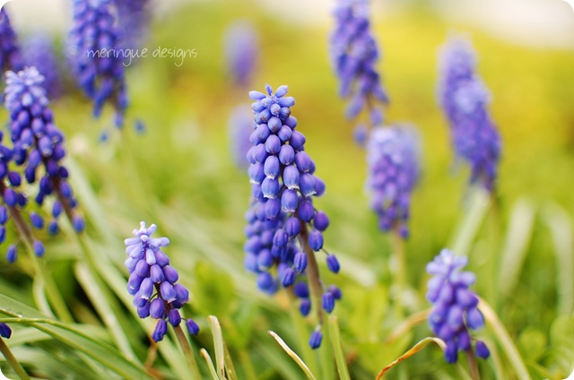 spring flowers 004a
