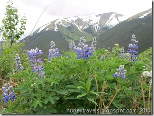Lupines and other wild flowers were abundant.