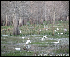 Natural bird sanctuary, Bushnell, Florida