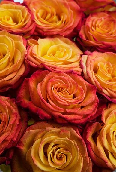 4C0B00985_20090603_lg calyx flowers