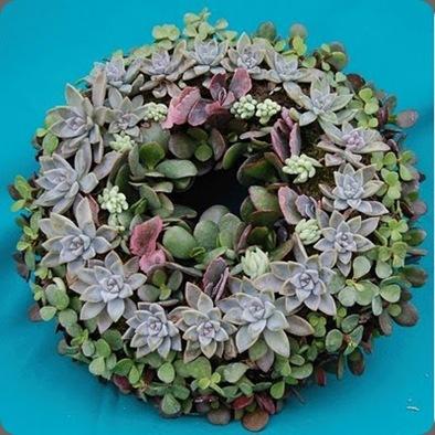 succulent wreath soolip