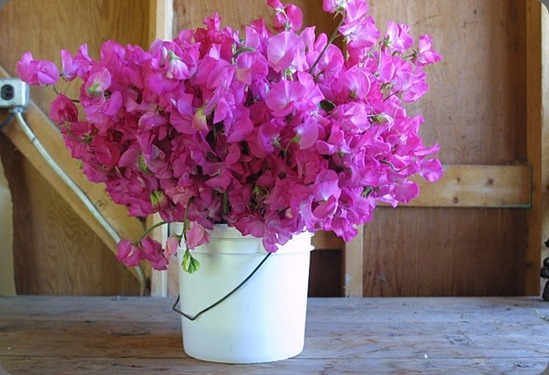 floret flowers sweet peas
