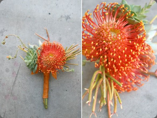 Bridesmaids bouquets succulents, pencil cactus and pin cushion proteas. arrangements designs