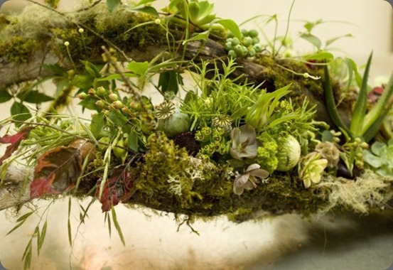francoise spring-woodland-Françoise-Weeks