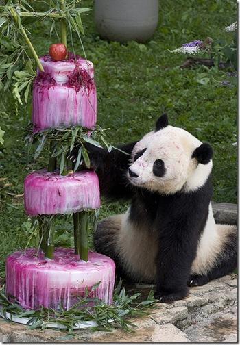 Panda_Birthday2