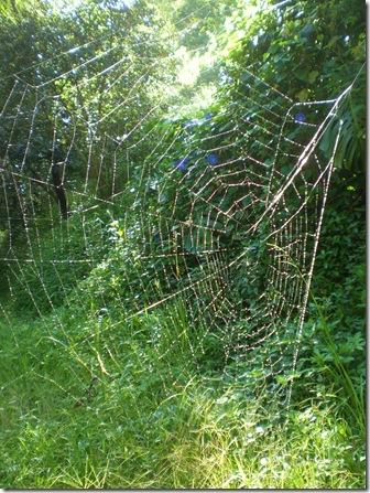 44 spider web