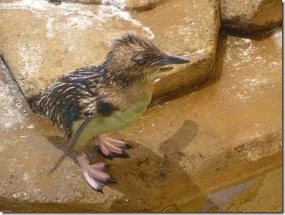 09 seaworld penguin