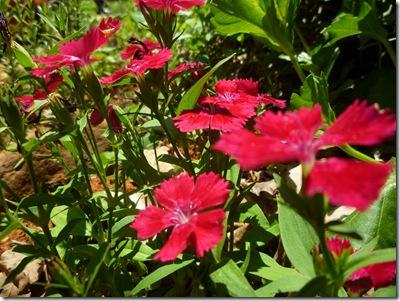 69 garden flowers