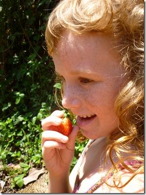 75 strawberry