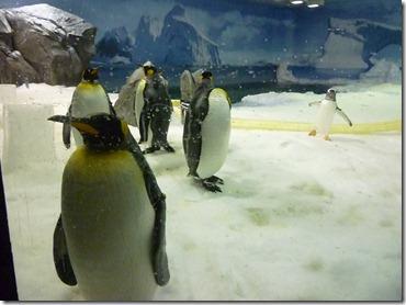 07 penguin